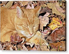 Autumn Dreaming Acrylic Print by Susan Leggett