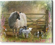 By The Gate Acrylic Print by Trudi Simmonds