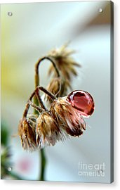Drop Acrylic Print by Michelle Meenawong
