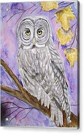 Grey Owl Acrylic Print by Belinda Lawson