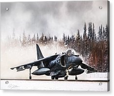 Snow Angel Harrier Acrylic Print by Peter Chilelli