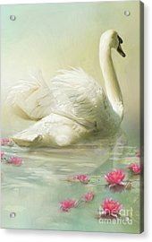 Swan Song Acrylic Print by Trudi Simmonds