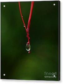 Waterdrop Acrylic Print by Michelle Meenawong