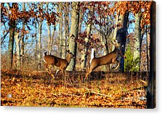 White Tail Deer Leaping  Acrylic Print by Peggy  Franz