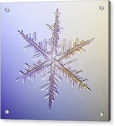 A Real Snowflake Showing The Classic Acrylic Print by Marion Owen