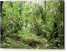 Amazonian Cloud Forest Acrylic Print by Dr Morley Read