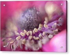Anemone Acrylic Print by Mark Johnson