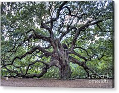 Angel Oak Acrylic Print by Dustin K Ryan