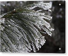 Arboretum Hoar Frost Acrylic Print by Steven Ralser