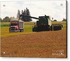August Harvest Acrylic Print by J McCombie
