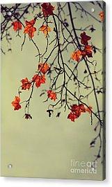 Autumn Acrylic Print by Diana Kraleva