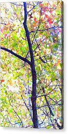 Autumn Leaves Acrylic Print by Scott Cameron