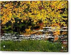 Autumn Pond 2013 Acrylic Print by Bill Wakeley
