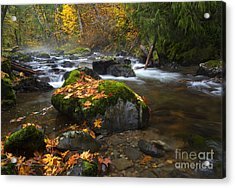 Autumn Stream Acrylic Print by Mike Dawson