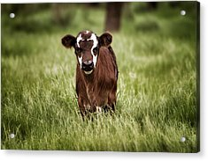 Baby Acrylic Print by Kimberly Danner