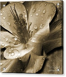 Beauty II Acrylic Print by Yanni Theodorou