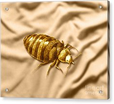 Bed Bug Acrylic Print by Spencer Sutton