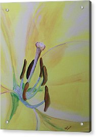 Bee Sees Acrylic Print by Rich Mason