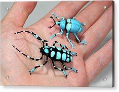 Beetles Acrylic Print by Tomasz Litwin