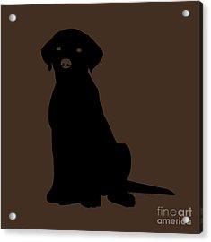 Black Labrador Acrylic Print by Elizabeth Harshman