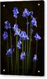 Blue Bells Acrylic Print by Svetlana Sewell