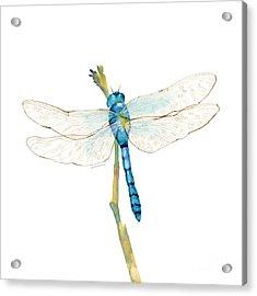 Blue Dragonfly Acrylic Print by Amy Kirkpatrick