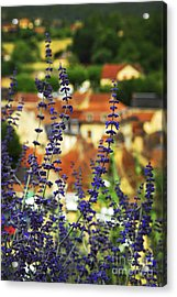 Blue Flowers And Rooftops In Sarlat Acrylic Print by Elena Elisseeva
