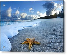 Blue Foam Starfish Acrylic Print by Sean Davey