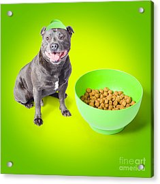 Blue Staffie With His Bowl Of Food Acrylic Print by Jorgo Photography - Wall Art Gallery