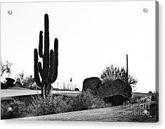 Cactus Golf Acrylic Print by Scott Pellegrin