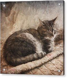Cat On The Bed Painterly Acrylic Print by Carol Leigh