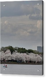 Cherry Blossoms - Washington Dc - 011311 Acrylic Print by DC Photographer