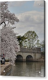 Cherry Blossoms - Washington Dc - 011328 Acrylic Print by DC Photographer