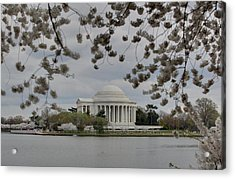 Cherry Blossoms With Jefferson Memorial - Washington Dc - 01137 Acrylic Print by DC Photographer