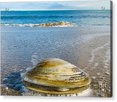 Clam's Point Of View Acrylic Print by Joe Faragalli