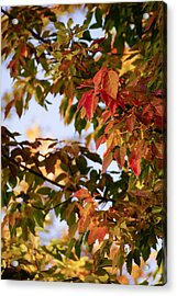 Colorful Leaves Acrylic Print by Gloria Pasko