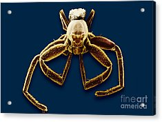 Crab Spider Acrylic Print by David M. Phillips