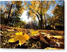 Fall Autumn Park. Falling Leaves Acrylic Print by Michal Bednarek