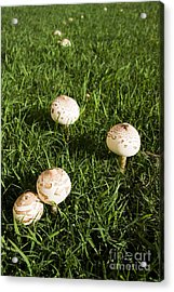 Field Of Mushrooms Acrylic Print by Jorgo Photography - Wall Art Gallery