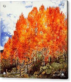 Flaming Aspens 2 Acrylic Print by Barbara Jewell