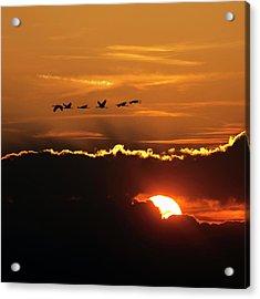 Flamingos At Sunset Acrylic Print by Babak Tafreshi