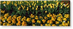Flowers In Hyde Park, City Acrylic Print by Panoramic Images