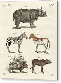 Four-footed Animals Acrylic Print by Friedrich Justin Bertuch