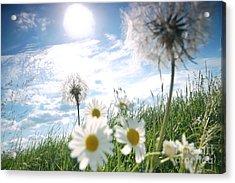 Fresh Meadow Background Acrylic Print by Michal Bednarek
