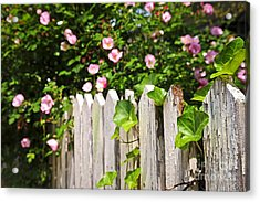 Garden Fence With Roses Acrylic Print by Elena Elisseeva