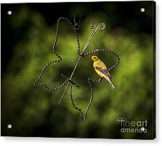 Golden Hour Acrylic Print by Cris Hayes