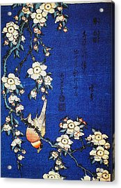 Goldfinch And Cherry Tree Acrylic Print by Celestial Images
