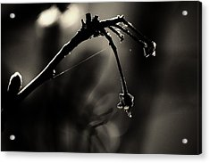 Hand Of Nature Acrylic Print by Jessica Shelton