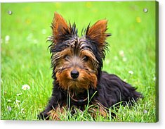 Hello Toby Acrylic Print by Angela Doelling AD DESIGN Photo and PhotoArt