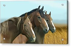 Hope Of The Mustangs Acrylic Print by Kate Black